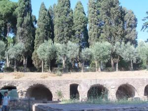 Olivenbäume in Italien vor Zypressen